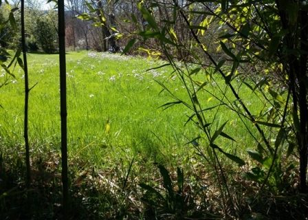 pelouse et cardamine
