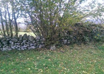 muret et arbustes